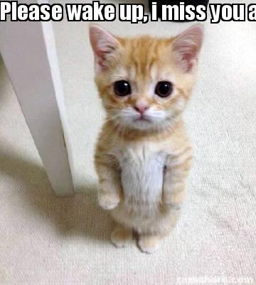 Miss You Meme Cat