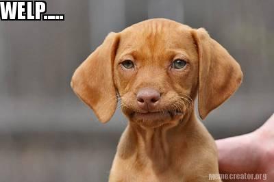 Top Memes Using Same Template Unamused Puppy Meme