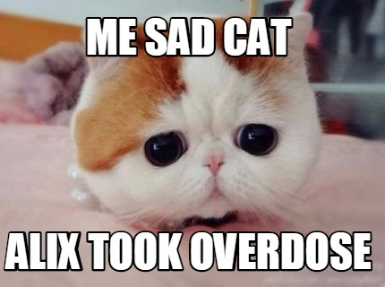 me-sad-cat-alix-took-overdose