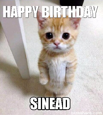 Can suggest Sad birthday cat accept