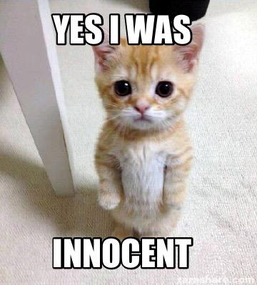 Yes Meme Cat Meme Creator - Yes I w...