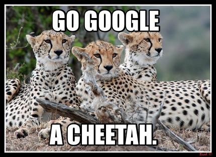 Meme Creator Funny Go Google A Cheetah Meme Generator At