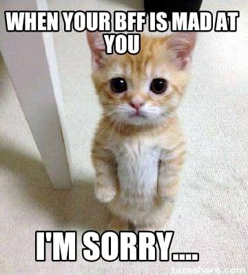 Cute Cat Sorry Meme