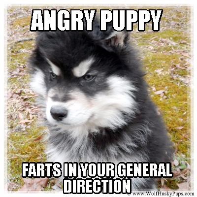 angry-puppy-farts-in-your-general-direction