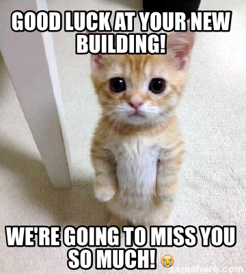 Funny Cat Good Luck Pictures