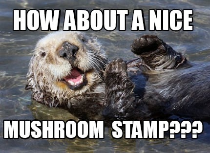 Otter Meme Generator How About A Nice Mushroom Stamp