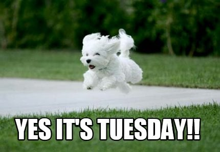 yes-its-tuesday