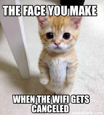 New Cat Meme