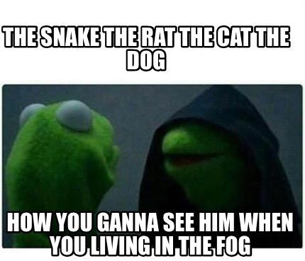 Rat Cat Meme