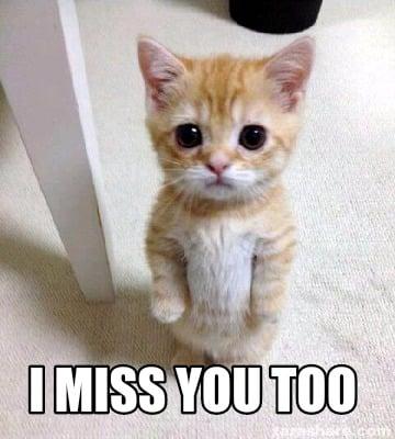 I Miss You Cat Meme