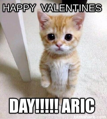Cute Cat Valentines Day Memes