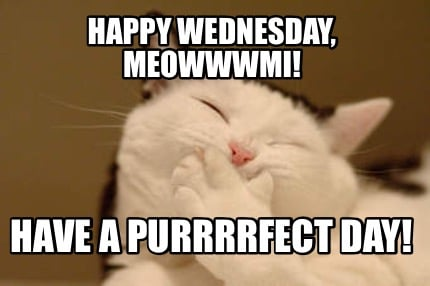 happy-wednesday-meowwwmi-have-a-purrrrfect-day