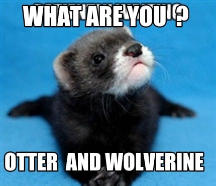 Meme Creator Funny What Are You Otter And Wolverine Meme