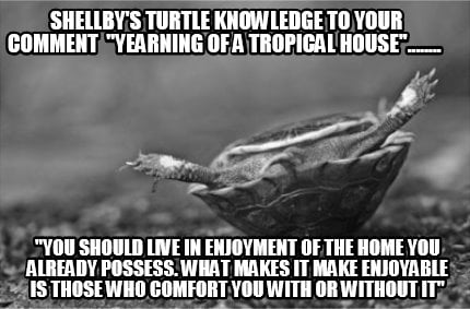 shellbys-turtle-knowledge-to-your-comment-yearning-of-a-tropical-house........-y