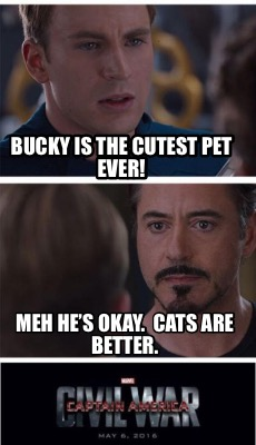 bucky-is-the-cutest-pet-ever-meh-hes-okay.-cats-are-better