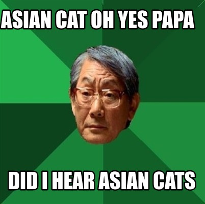 asian-cat-oh-yes-papa-did-i-hear-asian-cats