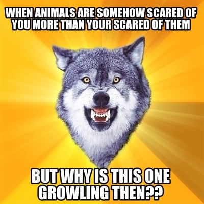 when-animals-are-somehow-scared-of-you-more-than-your-scared-of-them-but-why-is-