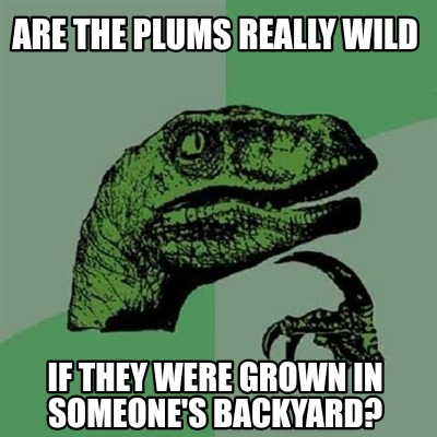 are-the-plums-really-wild-if-they-were-grown-in-someones-backyard