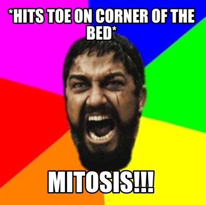 hits-toe-on-corner-of-the-bed-mitosis