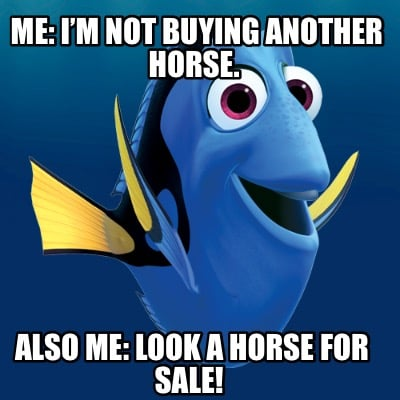 me-im-not-buying-another-horse.-also-me-look-a-horse-for-sale