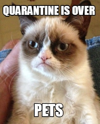 quarantine-is-over-pets