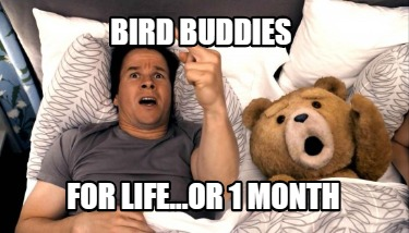 bird-buddies-for-life...or-1-month