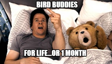bird-buddies-for-life...or-1-month0