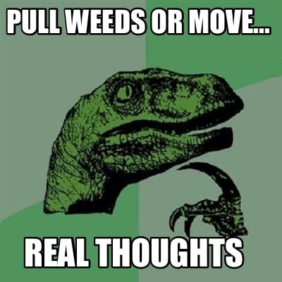 pull-weeds-or-move...-real-thoughts