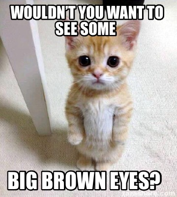 wouldnt-you-want-to-see-some-big-brown-eyes
