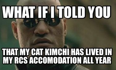 what-if-i-told-you-that-my-cat-kimchi-has-lived-in-my-rcs-accomodation-all-year