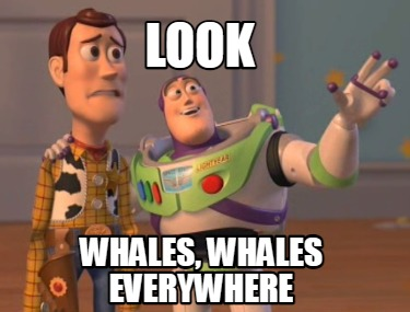 look-whales-whales-everywhere