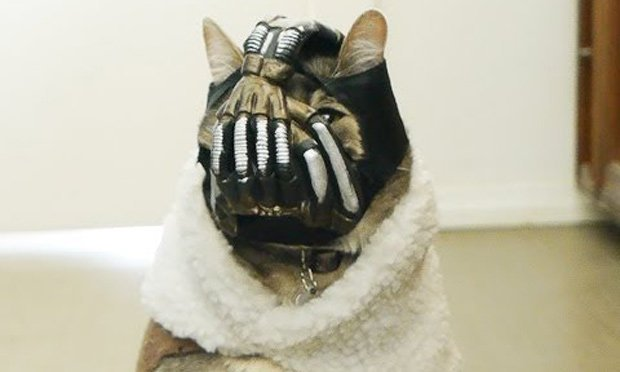 1158862 meme creator bane cat meme generator at memecreator org!