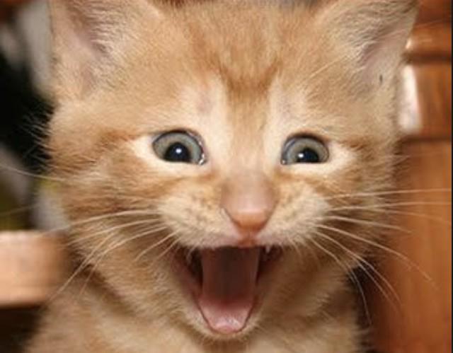 Meme Creator - HAPPY CAT Meme Generator at MemeCreator.org!