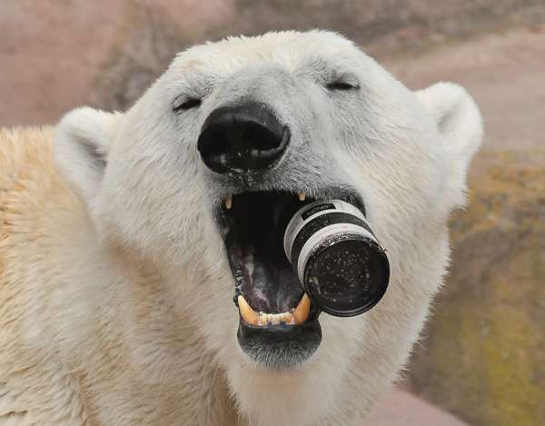 Meme Creator Drunk Polar Bear Meme Generator At Memecreatororg