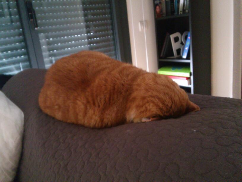 Meme Creator Nope Fat Cat Meme Generator At Memecreatororg