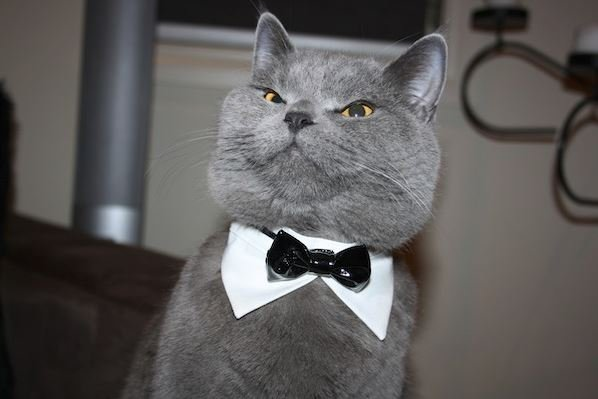 Sophisticated cat