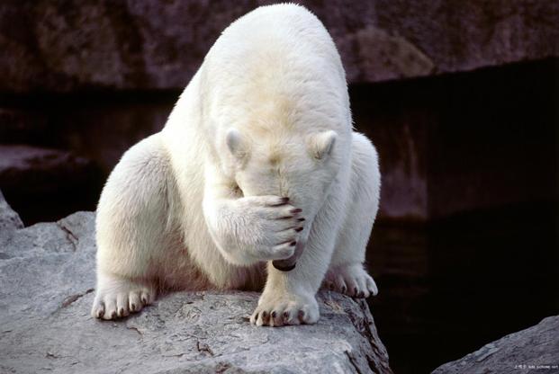 Meme Creator Disappointed Polar Bear Meme Generator At Memecreator
